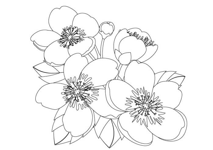 Осенний цветок рисунок легкий зависимости
