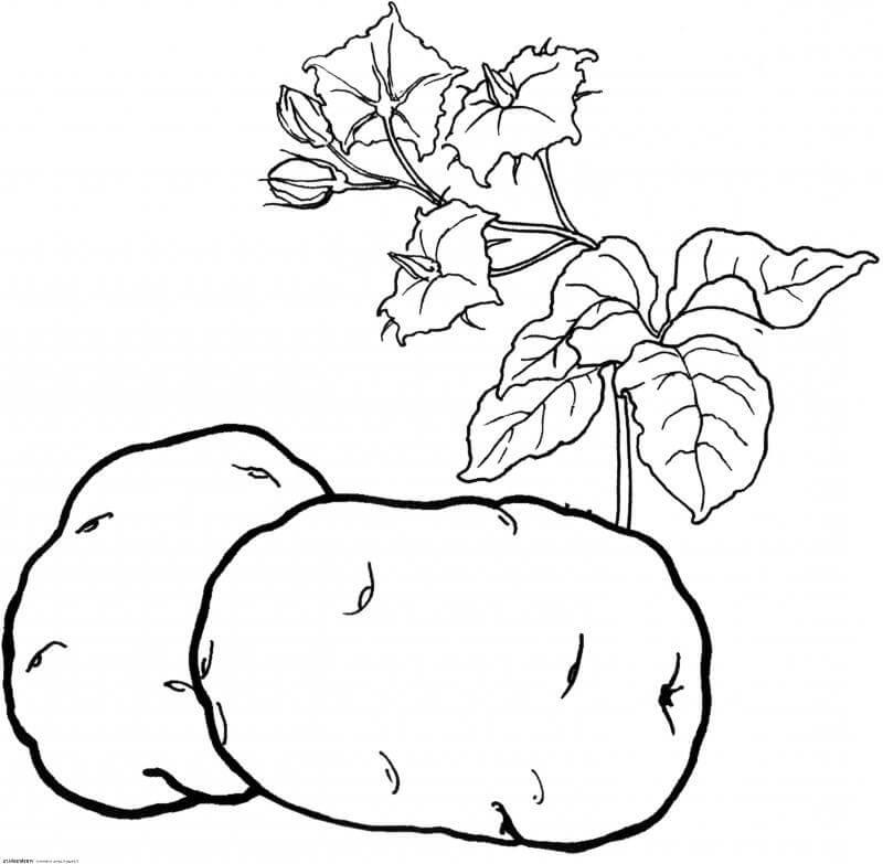 детские раскраски овощи фрукты детский сайт зайка